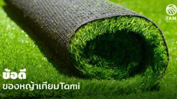 ทำไมครอบครัวคนรุ่นใหม่หันมาใช้หญ้าเทียมกันมากขึ้น?